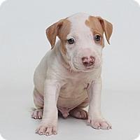 Adopt A Pet :: Montana (Foster) - Baton Rouge, LA