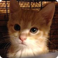 Adopt A Pet :: Popcorn - Franklin, WV