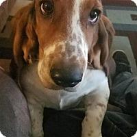 Adopt A Pet :: Buttercup - Woodland, CA
