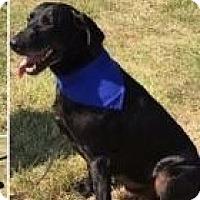 Adopt A Pet :: Buddy - LaGrange, KY