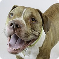 Adopt A Pet :: ZEUS - Plainfield, CT