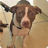 Adopt A Pet :: Cali - Ft. Lauderdale, FL