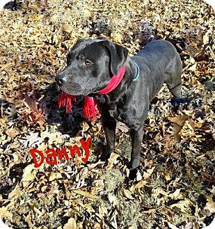 Labrador Retriever Mix Dog for adoption in Princeton, Kentucky - Danny