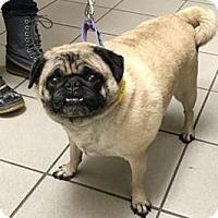 Adopt A Pet :: EFFIE - Bowmanville, ON