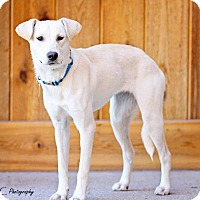 Adopt A Pet :: Indra - Salt Lake City, UT