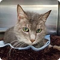 Adopt A Pet :: Holly - Elyria, OH