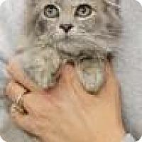 Adopt A Pet :: Pheonix - Columbia, SC