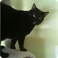Adopt A Pet :: Panther - Hallandale, FL