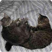 Adopt A Pet :: Pia - Tomball, TX