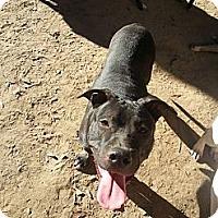Adopt A Pet :: Franklin - New orleans, LA