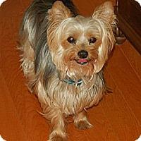 Adopt A Pet :: Spike - Charlotte, NC