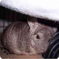 Adopt A Pet :: Freckles - Avondale, LA