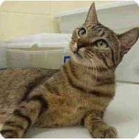 Adopt A Pet :: Darlin - Lake Charles, LA