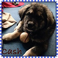 Adopt A Pet :: Cash - New Boston, NH