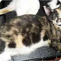 Adopt A Pet :: Maeli - Jacksonville, FL