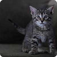 Adopt A Pet :: Gala - Lombard, IL