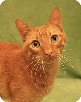 Declawed Cats For Adoption In Colorado Springs