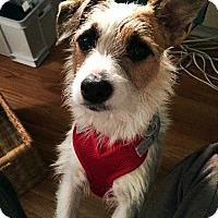 Adopt A Pet :: Skip - Adoption Pending - West Allis, WI
