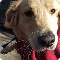 Adopt A Pet :: Rocky - Charlestown, RI