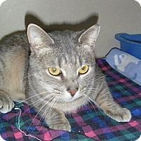 Adopt A Pet :: Edy - Hamburg, NY