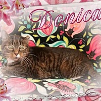 Adopt A Pet :: Donica - Brainardsville, NY