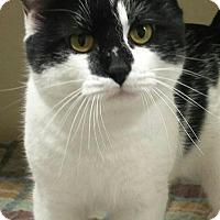 Adopt A Pet :: Seminole - Macon, GA