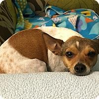 Adopt A Pet :: Brady - Marietta, GA