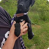 Adopt A Pet :: Rocky - Uxbridge, MA