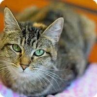 Adopt A Pet :: Squiggey - Fort Collins, CO