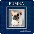 Adopt A Pet :: Pumba