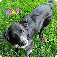 Adopt A Pet :: Gertrude - Enfield, CT