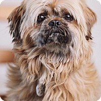 Adopt A Pet :: Chewy - Portland, OR