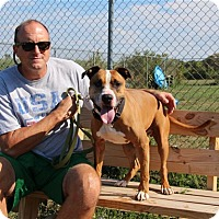 Adopt A Pet :: Abner-PRISON GRADUATE - Elyria, OH