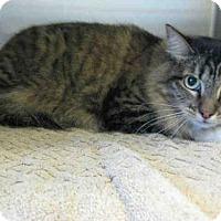 Adopt A Pet :: CRYSTAL - Norco, CA