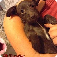 Adopt A Pet :: Fluttershy - Rosamond, CA