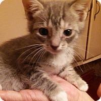 Adopt A Pet :: Sassy - Parkton, NC