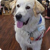 Adopt A Pet :: Jasper #0542 - Fort Worth, TX