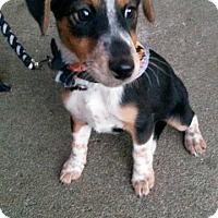 Adopt A Pet :: Page - Aurora, CO