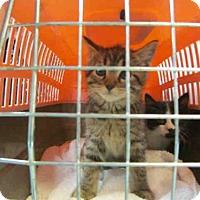 Adopt A Pet :: HAILEY - Oklahoma City, OK