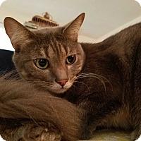 Adopt A Pet :: Sheila - Santa Ana, CA