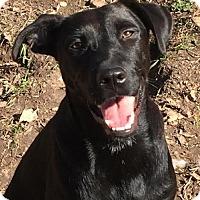 Adopt A Pet :: Lady - Barnhart, MO