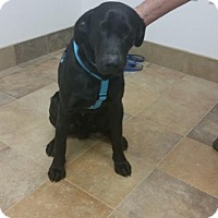 Adopt A Pet :: Angus - Iroquois, IL