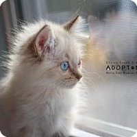 Adopt A Pet :: Strawberry - Edwardsville, IL