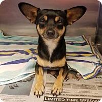 Adopt A Pet :: Caesar - Douglasville, GA