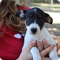 Adopt A Pet :: Leigh - Groveland, FL