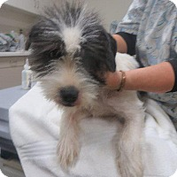 Adopt A Pet :: Tina - Murphysboro, IL