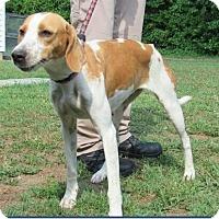Adopt A Pet :: Lily - Charlottesville, VA
