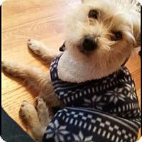 Adopt A Pet :: Tyson - Littleton, CO