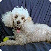 Adopt A Pet :: Valli - Ruskin, FL