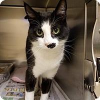Adopt A Pet :: Sushi - Windsor, VA